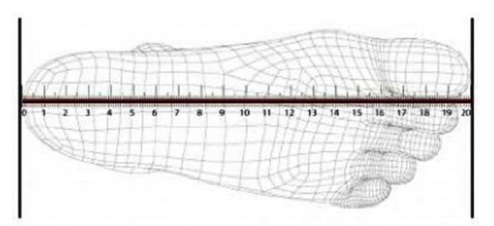 Zmierz swoją stopę od pięty do końca największego palca ( tak jak na obrazku poniżej )